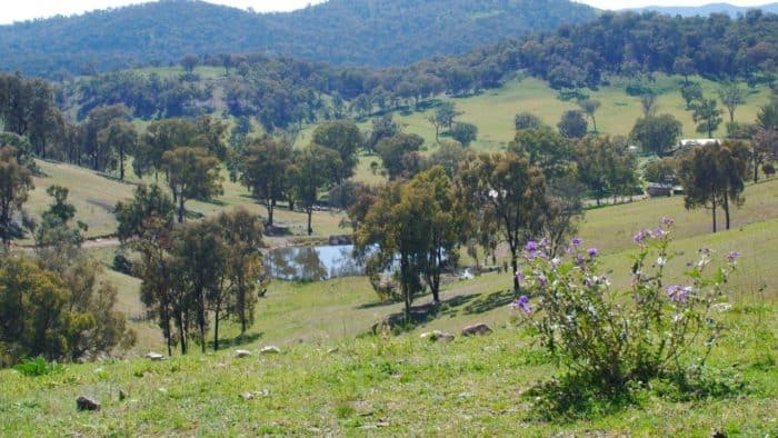 Ross Simshauser landscape - Invest Blue