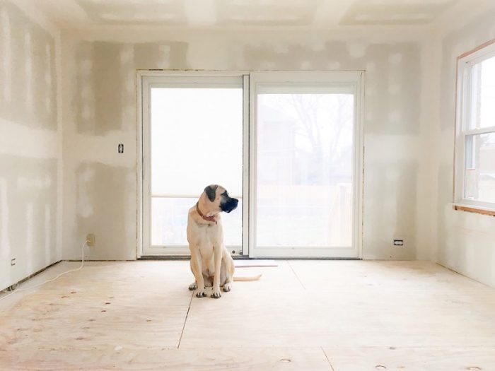 dog inside a new house