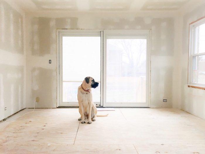 dog inside a new house