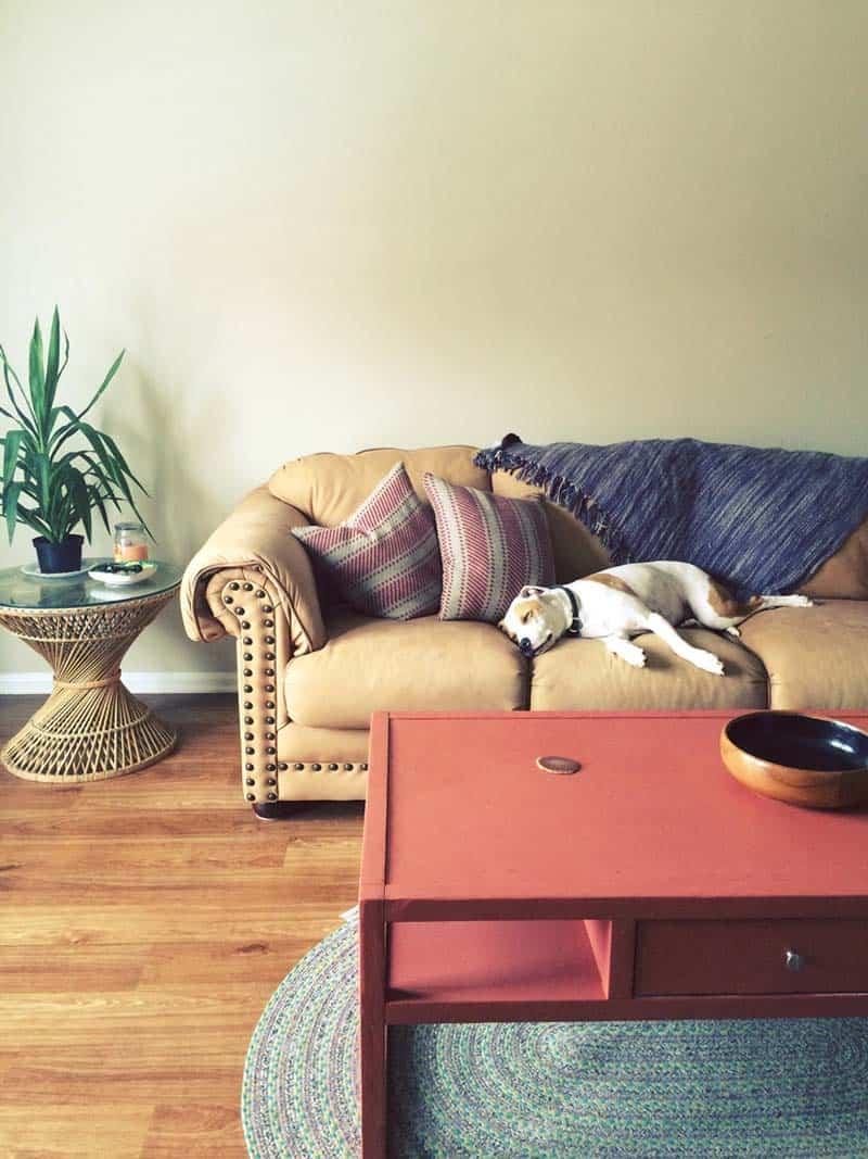 sleepy dog in house