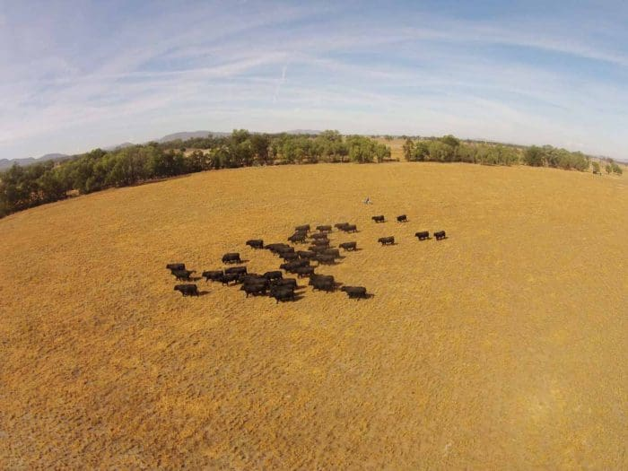 Tim-Vincents-Cattle-Farm-Property-Invest Blue