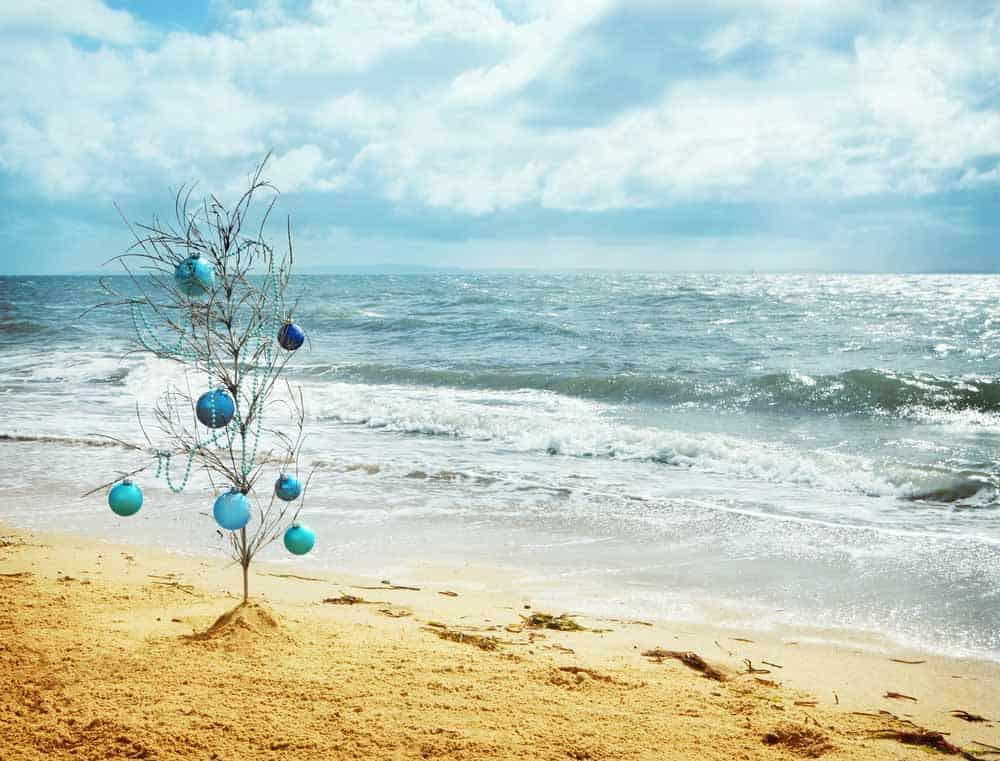 aussie christmas tree at beach