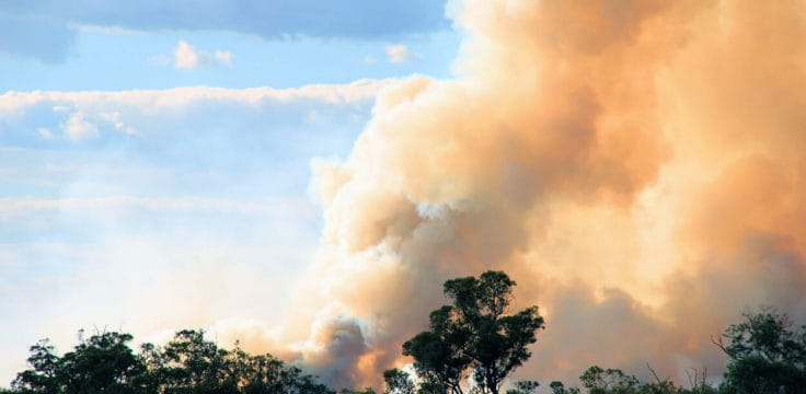 Bushfire Relief: Financial Support & Donating Guide
