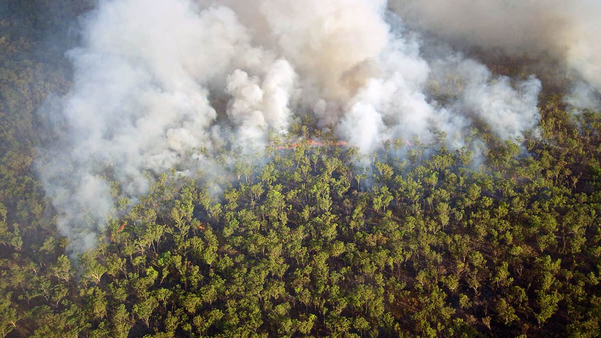 Bushfires and the Australian economy