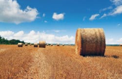 Supporting drought affected farmers with Buy a Bale fundraiser